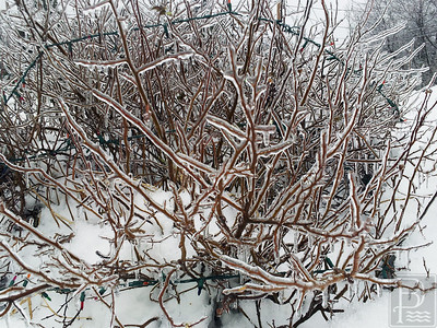 cn_web_ice_storm_gallery_010214_03
